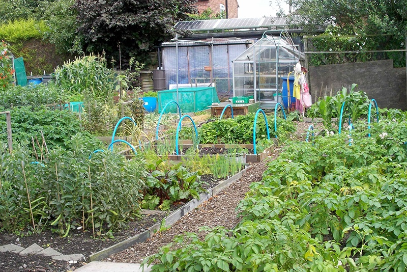 Covid-19 update on allotments